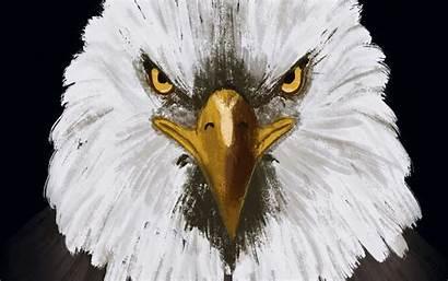 Eagle Bird Head Background Widescreen Wallpapers Wallpaperscraft