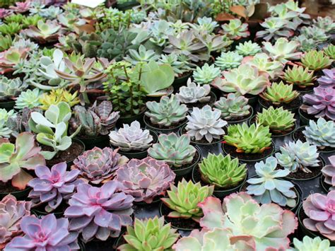 What You Need to Know About Succulent Dormancy | World of Succulents