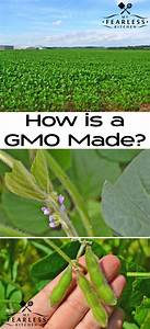 How Is A Gmo Made