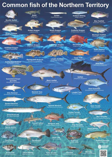 common nt fish ntgovau
