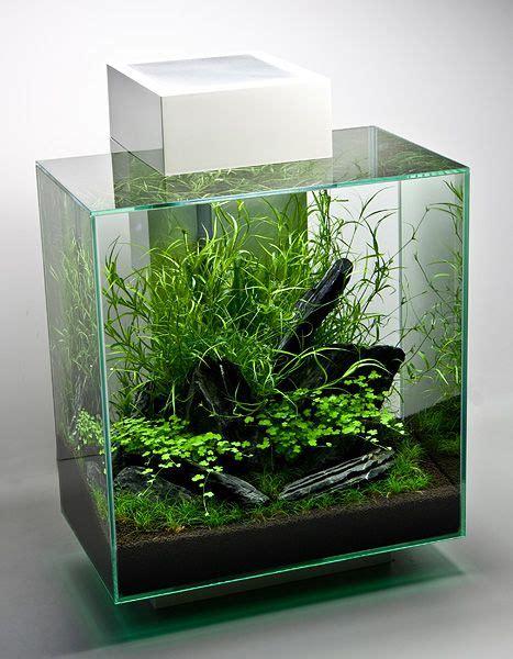 Fluval Edge Ii  Aquascaping & Live Plants Pinterest
