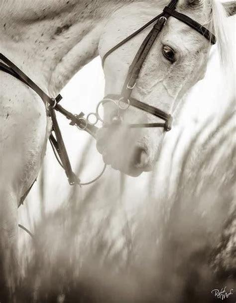 horse true faithful visit horses