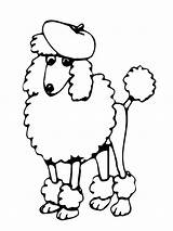 Poodle Coloring sketch template