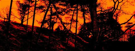scary dark forest  stock photo public domain pictures