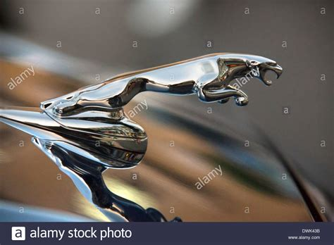 Jaguar Cars Symbol by Symbol Jaguar Stock Photos Symbol Jaguar Stock Images
