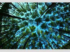 MacamMacam Hutan di Indonesia beserta Penjelasannya Lengkap