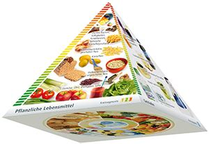 fettleber ernährung pdf