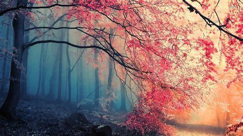 Beautiful Background Pics ·① WallpaperTag