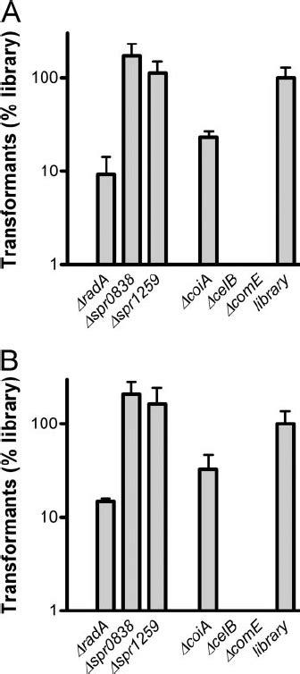 Transformation of S. pneumoniae R6 mutant and wild-type