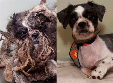 8 bouleversantes m 233 tamorphoses de chiens abandonn 233 s de tous cause animale wamiz