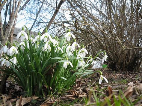 pavasara ziedi* - Spoki