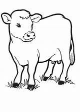 Cow Coloring Pages Coloringpages1001 sketch template