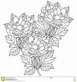 Coloring Peony Bouquet Adults Vector Drawn Hand Artwork Drawing Dreamstime Illustration sketch template