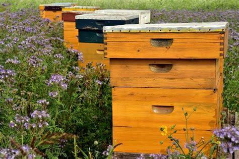 Do 25. oktobra traje prijavljivanje za Pčelarski sajam u Novom Sadu - Agro TV