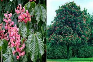 Petit Arbre Persistant : arbre croissance rapide feuillage persistant salon ~ Melissatoandfro.com Idées de Décoration