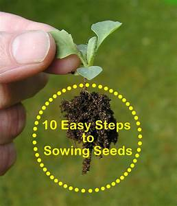 Gardening For Beginners  10 Easy Steps To Sowing Seeds