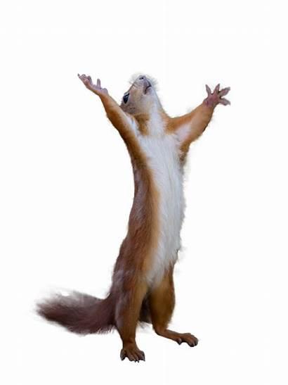 Squirrel Praise Cutouts Imgur