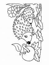 Hedgehog Coloring Printable Animals Animal Template Templates Getdrawings Getcolorings Mycoloring sketch template