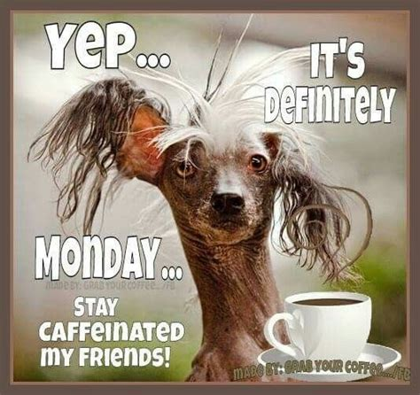 Funny Monday Meme - the 25 best happy monday funny ideas on pinterest funny bears shark quotes and animal captions