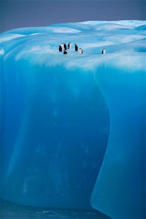 penguins  ice shelf antarctica photo  sunsurfer