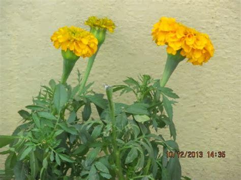 all season flower top 28 all season flower all season flower garden all season flower gardens flowers by