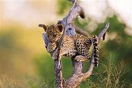 Baby Animal Wildlife Photography