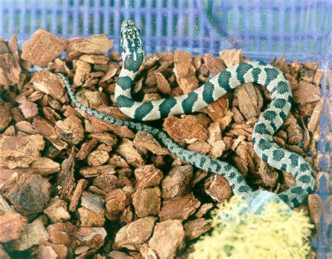 common reptiles  kentucky