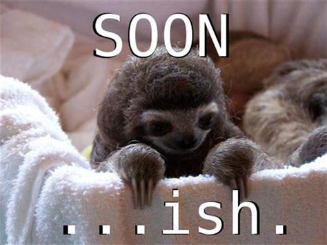 Sloth Meme Pictures - sloth soon meme dump a day