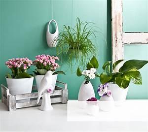 Silberne Deko Vasen : vasen und k bel f r blumen und pflanzen westwing ~ Indierocktalk.com Haus und Dekorationen
