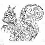 Coloring Squirrel Adult Abstract Acorn Letter sketch template