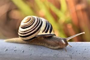 Schnecken Mit Haus : snail shell nature free photo on pixabay ~ Lizthompson.info Haus und Dekorationen