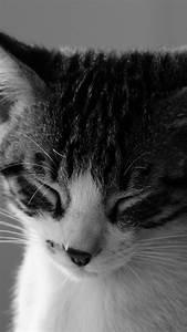 Sleepy Cat Wallpaper - iPhone, Android & Desktop Backgrounds
