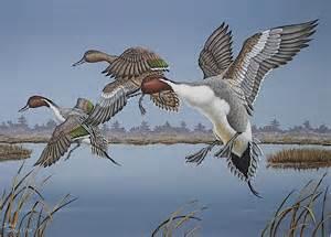 Wildlife Duck Prints Art