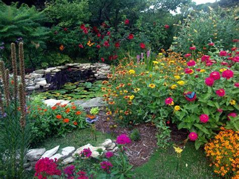 butterfly garden  pond  wonderful butterfly