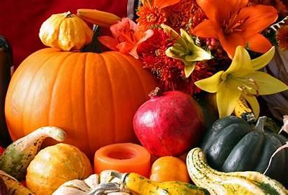 Harvest Fall Pumpkin Desktop Background Wallpapers Iphone