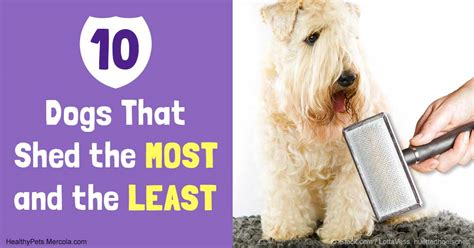 what dogs shed the most and least the best way to manage shedding