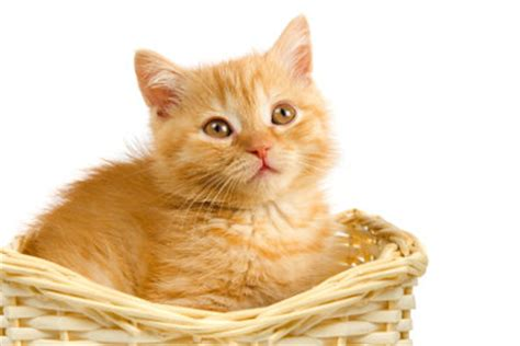 hausmittel gegen katzenurin hausmittel gegen katzenurin erfolgreich einsetzen so geht s