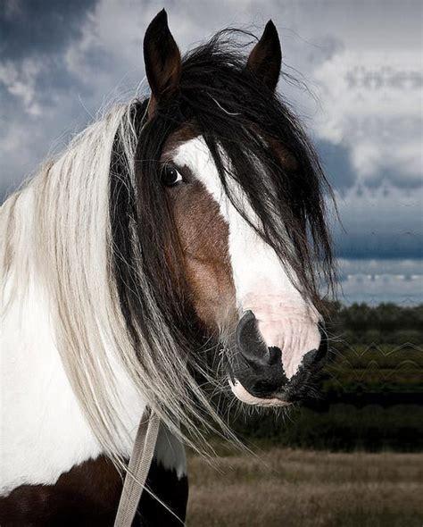 amazing horse pictures