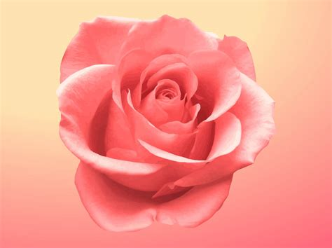 rose blossom vector art graphics freevectorcom