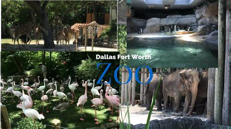 zoo worth fort dallas texas