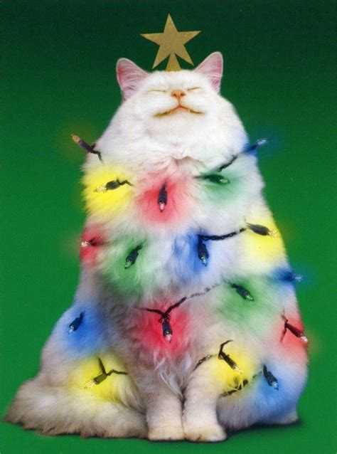 xmas tree made out of cats cats celebrating