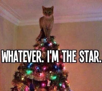 Cat Christmas Tree Meme - sears holiday decorating 171 fueledbylolz