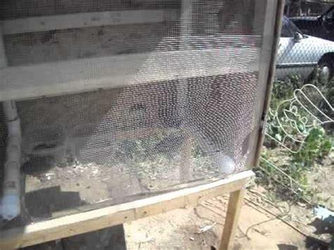 quail pen setup with nesting box added youtube