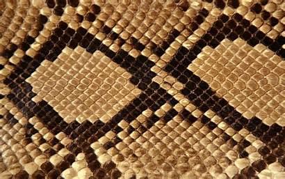 Snake Skin Wallpapers Background Pattern Patterns Animal