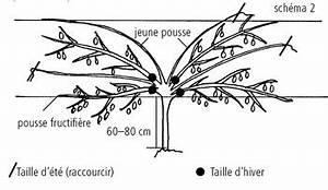 Tailler Les Kiwis : kiwi actinidia deliciosa et chinensis h berli fruchtpflanzen ag neukirch egnach ~ Farleysfitness.com Idées de Décoration