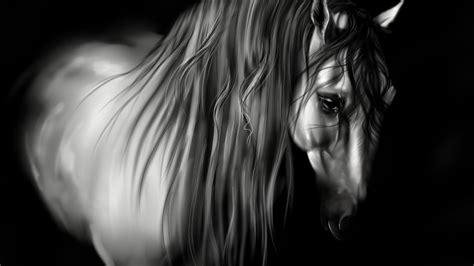 Animal Sad White Horse 3d Digital Art Beautiful Desktop Hd