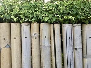 Sichtschutz Selber Bauen : sichtschutz f r den garten selber bauen so geht 39 s ~ Lizthompson.info Haus und Dekorationen