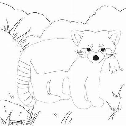 Panda Coloring Animal Acrobatic Mitraland
