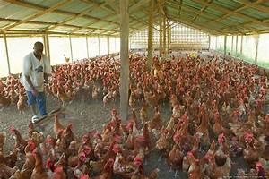 Poultry farming proposal pdf
