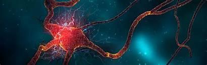 Dual Monitor Neuroscience Wallpapers Teahub Io Screen